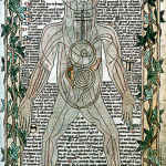 Medieval Doctors Human anatomy book
